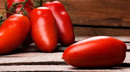 segredos tomate